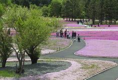 Розовый мох на Mt fuji Стоковые Изображения RF