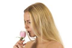 розовый нюх стоковое фото rf
