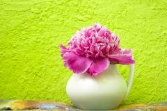 Розовый пион в белой вазе Стоковое Изображение