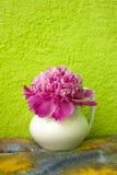 Розовый пион в белой вазе Стоковое фото RF