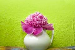 Розовый пион в белой вазе Стоковая Фотография RF
