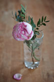 Розовый пион поднял в стекло Стоковые Фотографии RF
