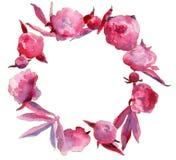 Розовый пион цветет гирлянда Стоковое Изображение