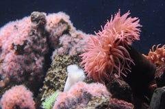 Розовый подводный пейзаж Стоковая Фотография