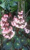 Розовый пук цветка Стоковые Фотографии RF