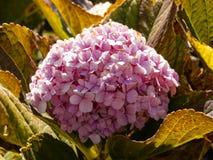 Розовый пук цветков в солнечности утра стоковые фотографии rf