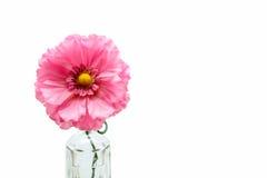 Розовый пластичный цветок в бутылке Стоковые Фото