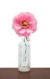 Розовый пластичный цветок в бутылке Стоковое фото RF
