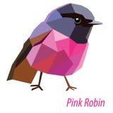 Розовый робин Стоковое Изображение