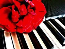 Розовый рояль стоковые фото