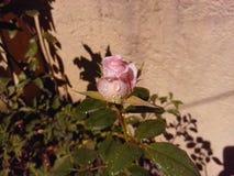 Розовый символ ВЛЮБЛЕННОСТИ стоковые фото