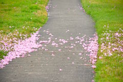 Розовый след трубы Стоковая Фотография