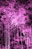 Розовый тонизированный снимок рощи banboo в ночи стоковая фотография