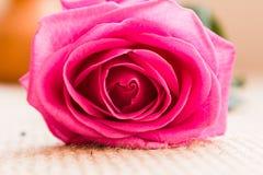 Розовый тонический комплект подготовки чая Стоковые Фото