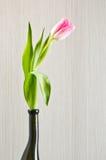 Розовый тюльпан в черной стеклянной вазе стоковые изображения rf