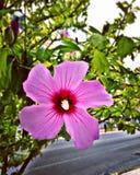 Розовый фокус цветка стоковые фото