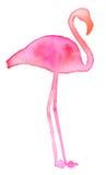 Розовый фламинго Нарисованный рукой экзотический силуэт птицы Стоковое Фото