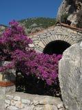 розовый цвести, кафа среднеземноморские Стоковая Фотография