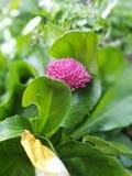 Розовый цветок вместе с зелеными листьями стоковые изображения rf