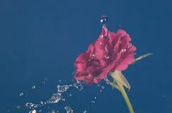 Розовый цветок в дожде, падения воды светя, год сбора винограда, стоковые фото
