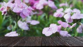 розовый цветок в поле & x28; image& x29 нерезкости; с выбранной таблицей древесины фокуса стоковые изображения