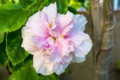 Розовый цветок в древесинах Стоковые Изображения