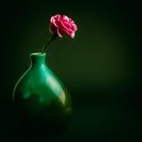 Розовый цветок гвоздики в зеленой вазе Стоковая Фотография