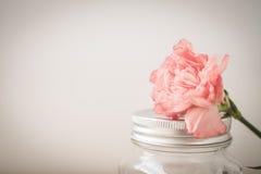 Розовый цветок гвоздики Стоковая Фотография RF