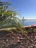 Розовый цветок заливом Стоковые Фото