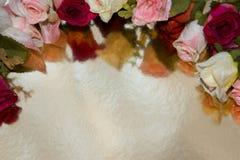 Розовый цветок на предпосылке золота Стоковое фото RF