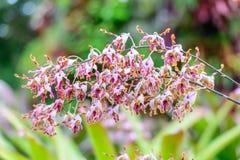 Розовый цветок орхидеи в саде Стоковые Изображения RF
