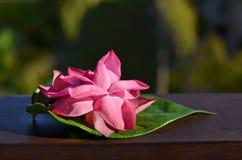 Розовый цветок лотоса на лист Стоковое фото RF