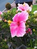 Розовый цветок Стоковые Изображения