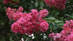 Розовый цветок акции видеоматериалы