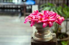 Розовый цветок fangapi на вазе для украшения Стоковые Фото