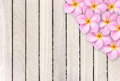 Розовый цветок frangipani на серой деревянной предпосылке планки Стоковая Фотография