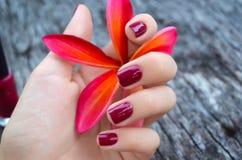 Розовый цветок plumeria в женской руке с красивым маникюром Стоковая Фотография