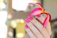 Розовый цветок plumeria в женской руке с красивым Стоковое Изображение RF