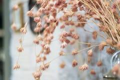 Розовый цветочный стебель Стоковое Изображение
