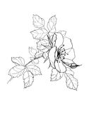 Розовый чертеж карандаша цветка Стоковое фото RF