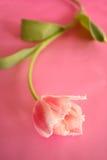розовый экстренныйый выпуск Стоковые Изображения RF