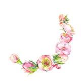 Розовый элемент акварели состоит из розовых цветков Vint нарисованное рукой Стоковое Изображение RF