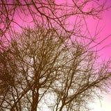 Розовый Стоковое фото RF