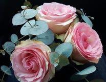 Розовый Стоковое Фото