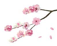 Розовый abloom цветок магнолии Стоковая Фотография