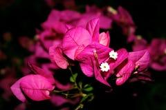Розовый confetti Стоковое Изображение RF