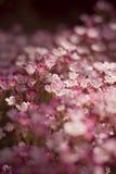 Розовый flowerbed Стоковое фото RF
