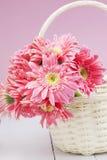 Розовый gerbera в корзине с розовой предпосылкой Стоковое Изображение RF
