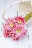 Розовый gerbera в корзине с розовой предпосылкой Стоковая Фотография RF