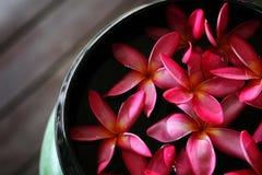 Розовый Plumeria или Leelawadee цветут плавать в опарник стоковое изображение